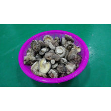 Shiitake Dried High Quality Smooth Mushroom