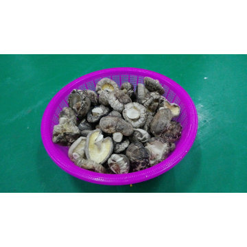 Shiitake secada seta suave de alta calidad