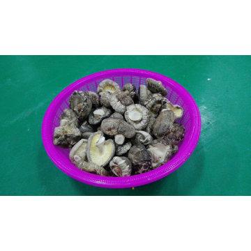Shiitake Dried High Quality Smooth Mushroom