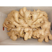 Versorgung Air Dry Ginger Big Menge