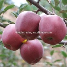 China maçã Huaniu fresca de origem Guansu