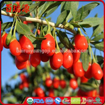 Goji berries health benefits youtube dark chocolate goji berries health benefits goji berries where to buy local