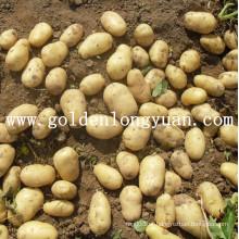 Fornecimento de batata fresca de alta qualidade