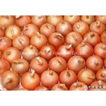 Chinese Export Fresh Yellow Onion