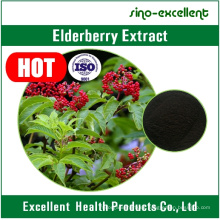 Natural Flavonoides Anthocyanins Extracto de Nigra de Sambucus de Baya