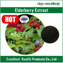 Anthocyanidins Elderberry extract powder
