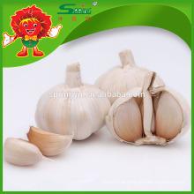 Chinês de alta qualidade fresco alho branco puro ou alho branco normal