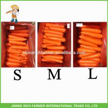 Exportateurs chinois de carottes naturelles