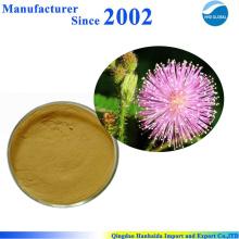 Heißer Verkauf & Hot Cake hochwertige Natur Mimosa Pudica Extrakt, Mimose Pudica Pulver
