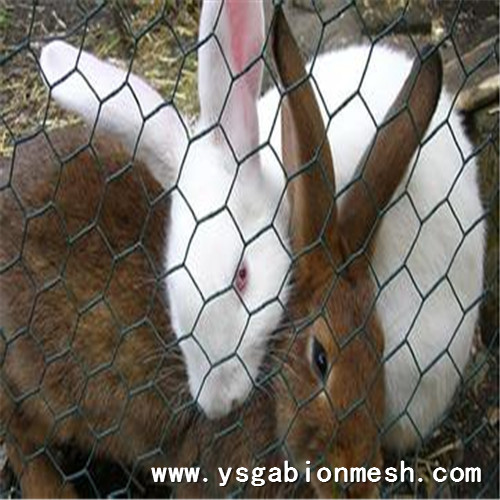 Good Hexagonal wire netting fence for chicken cage
