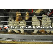 Маленькая куриная клетка Оборудование Brooder Chicken Cage