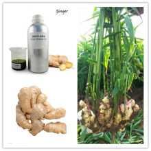 Supercritical CO2 Ginger Essential Oil Gingerol