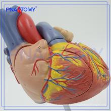 Type de modèle de simulation médicale PNT-0405 et modèle d'anatomie humaine en plastique / modèle de coeur