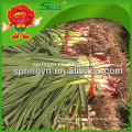 HOT sale super garlic sprouts net bag for garlic sprouts garlic specification