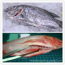 high quality frozen tilapia WGGS
