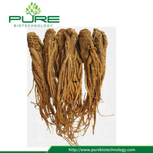 Alta calidad Radix Angelica Sinensis Whole Roots