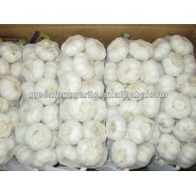 chinese new crop fresh garlic wholesale price