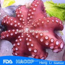 HL089 Осьминог из морепродуктов на продажу