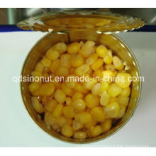 Good Quality Canned Sweet Corn for Different Market (HACCP ISO Brc Halal Kosher FDA)
