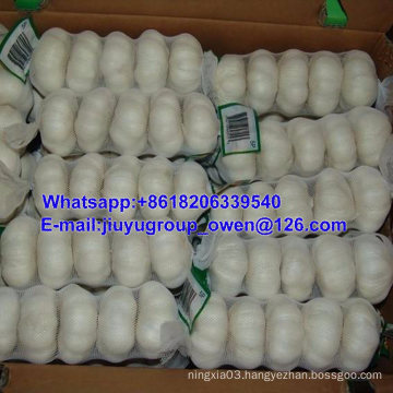 New Crop Raw Normal/Pure White Garlic Prompt Shipment
