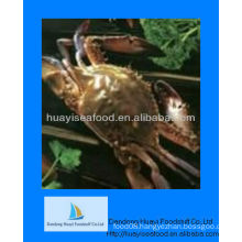 IQF frozen whole crab