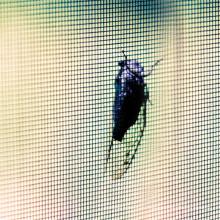 Парника HDPE Анти-плетение насекомого