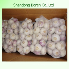 Health Benefit Competitive Price Fresh Garlic