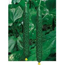 HCU12 Huoxi 35см в длину,китайский F1 гибрид огурца семена овощных семена