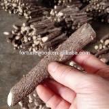 China paulownia big tree hybrid root supplier