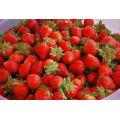 IQF Freezing Organic Strawberry HS-16090906