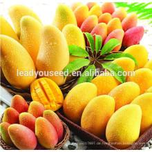 MG01 Huangling gute Qualität hohe Produktion Hybrid Mango Samen zum Verkauf