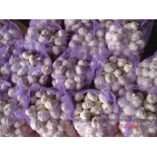 Alho branco fresco com boa qualidade