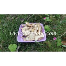 2016 Bueno Secado Boletus Edulis Price, Porcini Mushrooms for Sale
