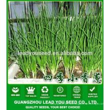 NSH01 Kilu Vegetable scallion seeds producer, nombre de las semillas