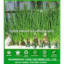 NSH01 Kilu Produtor de sementes de cebolinha, nome de sementes