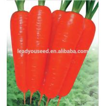 MCA021 Dahong good quality heat resistant carrot seeds price