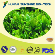 BEST PRICE Natural Green tea extract wholesale/Green tea extract powder in bulk/Green tea extract capsule