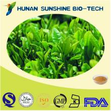 Лучшая цена на природный экстракт зеленого чая оптом/экстракт зеленого чая порошок оптом/экстракт зеленого чая капсулы