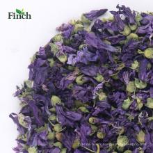 Finch Nouvelle Arrivée Santé Herbal Tea Dry Violet Flower