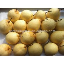 China Birne, Ya Birne, Birne frisches Obst