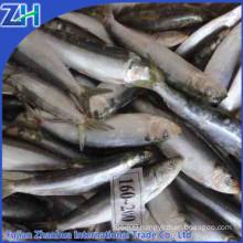 fishing nets pacific sardines bait on sale