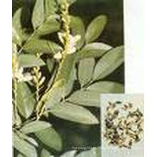 Hochwertige Quercetin, Rhamnose, Troxerutin & Rutin