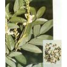 Quercetina de alta calidad, Rhamnose, Troxerutin y Rutin
