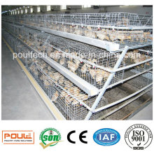 Лучшая цена Хорошее обслуживание Pullet Chicken Cage