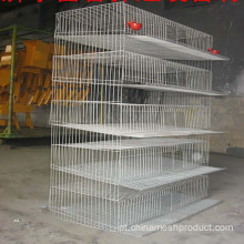 Poultry Farm Chicken Layer Cage Em Joanesburgo