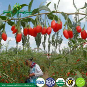 2018 Certified organic red goji berries SO2 Free