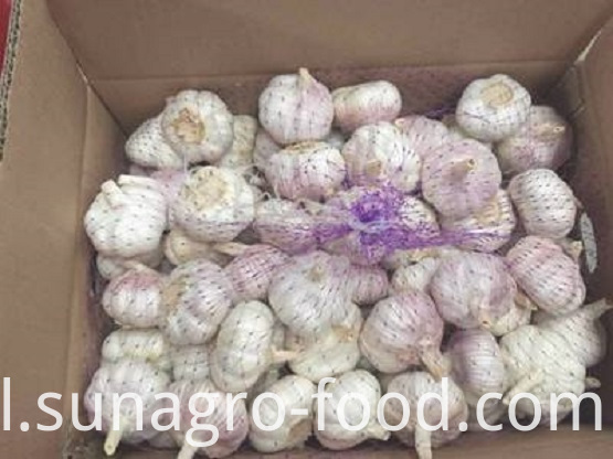 White Garlic Is Packed In Ordinary Cases