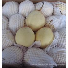 Nouvelle poitrine ISO Fengshui Fresh Crop Fresh