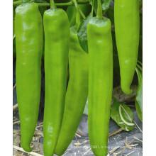 HP20 Sendu F1 hybride piment / graines de piment dans les graines de légumes