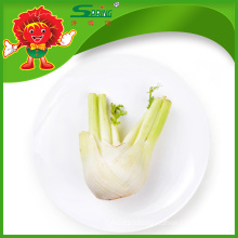 Supply Fresh Fennel Head at Lowest Price